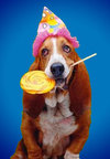 Birthday_dog